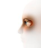 Biometric recognition,conceptual artwork