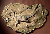 Baryonyx dinosaur reconstruction