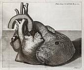 Heart of King George II,18th century