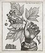 Ichthyosis skin condition,18th century