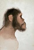 Paranthropus boisei hominid