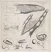 Science illustrations,18th century