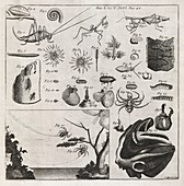 Zoological illustrations,18th century