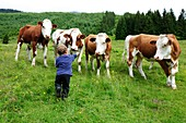 Boy in green field with free grazing cows