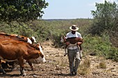 Farmer caring for a newborn calf
