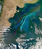 Algal bloom off Argentinian coast