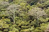 Tropical dry forest,Ecuador