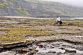 Lyme Regis at low tide