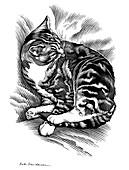 Cat grooming its fur,artwork