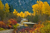 Similkameen River in autumn