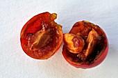 Holly berry (Ilex aquifolium