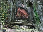 Purgatorius hiding from a Tyrannosaur