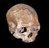 Cro-Magnon 1 fossil skull