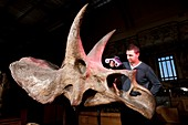 Triceratops fossil,3D scanning