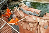Collecting eggs from Nile crocodiles