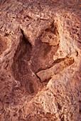 Dinosaur footprint in Arizona