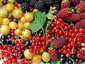 Still life of summer berries