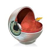 Eye anatomy,artwork