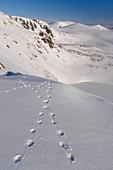 Ptarmigan tracks in snow,Cairngorms