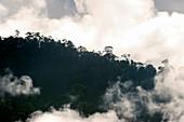 Rainforest,Borneo