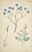 Flowering plants,18th century artwork