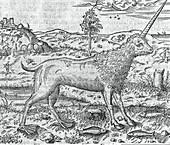 Mythical hybrid creature,16th century