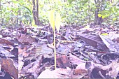 Young tree growing in a rain forest