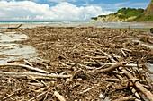 Driftwood after a storm,Ecuador