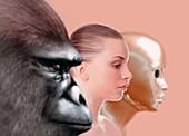 Past and future human evolution,artwork