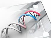 DNA molecule,artwork