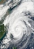 Typhoon Haiyan,2001