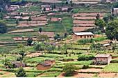 Rwandan farming