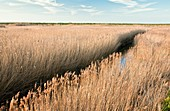 Marshland,UK