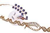 Gene expression,artwork