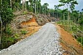Tropical rainforest road construction