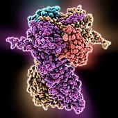 Heat shock protein 90 chaperone complex