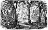 Carboniferous swamp,artwork
