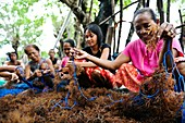 Seaweed farming,Indonesia