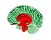Human brain,artwork
