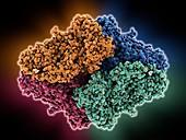 Beta-galactosidase molecule