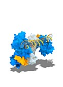 Notch transcription,molecular model