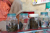 Medical leeches for sale in Indonesia