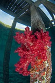 Soft coral growing on jetty