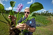 Water hyacinth wasterwater treatment