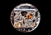 Painted concrete sample,light micrograph