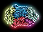 Vitamin B12 import proteins