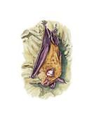 Greater horseshoe bat roosting,artwork