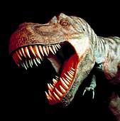 Tyrannosaur rex head