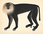 Monkey,artwork