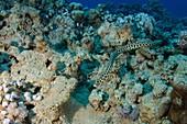 Diving at Aquaba - Red Sea